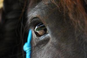 paardenoog foto