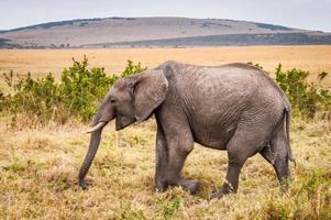 dieren in Kenia foto