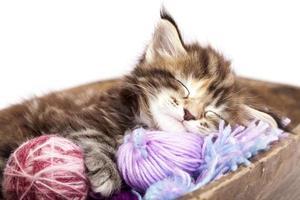 slapende kitten foto