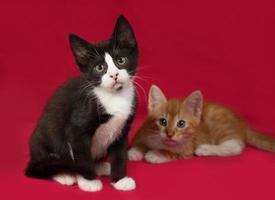 twee kitten, zwart en rood en wit zittend op rood foto