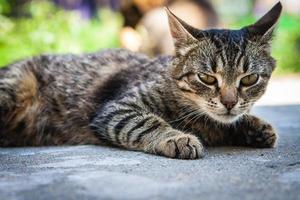 agressief afgestemde kat leugens foto