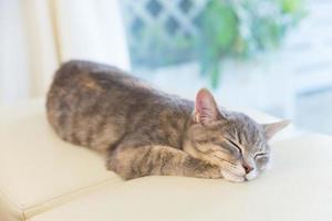 slapende kat op studio stoel foto