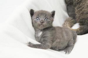 kitten kijken naar de camera foto