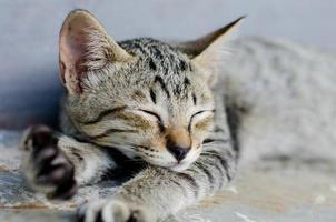 kleine poesjeslaap foto