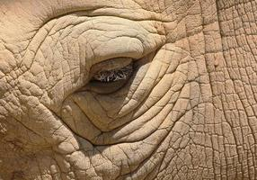 oog van een neushoorn foto