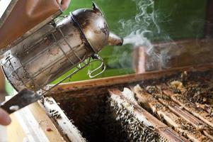 imker rookt zijn bijen foto