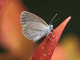 kleine vlinder foto