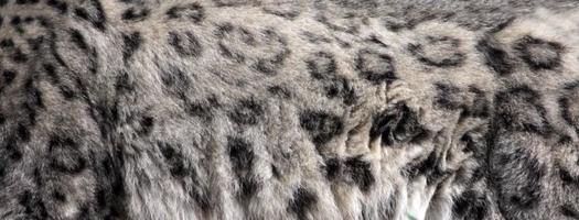 sneeuw luipaardvacht foto