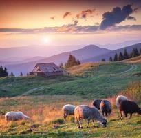 kleurrijke zomer zonsondergang in de Karpaten foto
