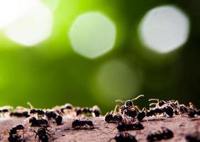 groep mieren groene achtergrond en bokeh foto