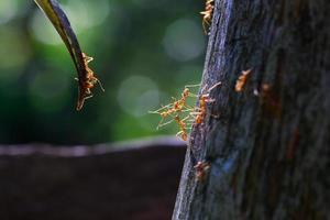 close up van mieren eenheid elkaar bereiken foto