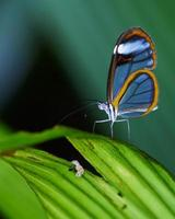 vlinder en mier foto