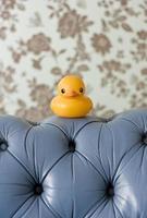 rubberen eend op sofa foto