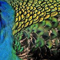 geweldige blauwgroene en gouden kleurenachtergrond foto