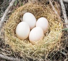 eieren voor eend foto