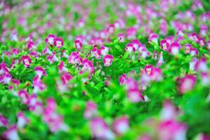 pauw bloementuin paars glitter foto