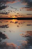 ganzen bij zonsondergang foto