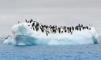 volwassen adele pinguïns gegroepeerd op ijsberg foto