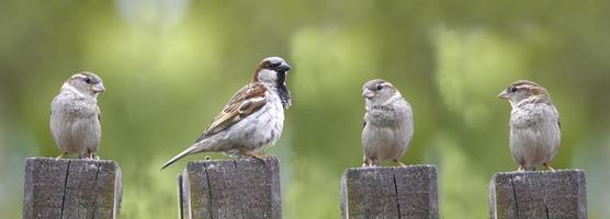 vier vogels in de rij staan op een logboek foto
