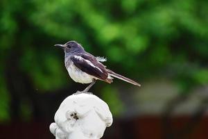 vogel foto