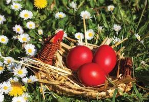 Paas eieren foto