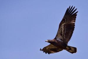 nieuwe vleugels foto