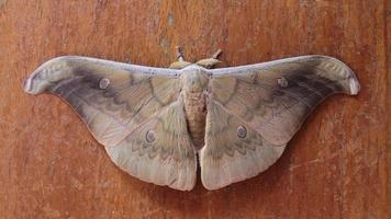 vlinder bruine kleur foto