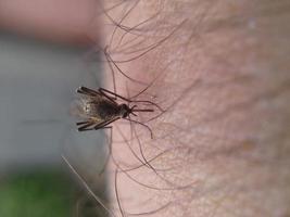 muggenbeet foto