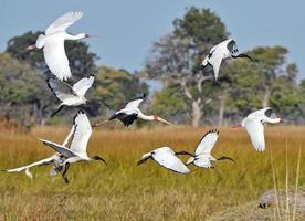 vlucht nemen, botswana foto