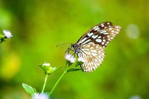 vlinder op witte grasbloem foto