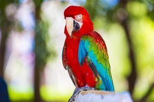 kleurrijke papegaai foto