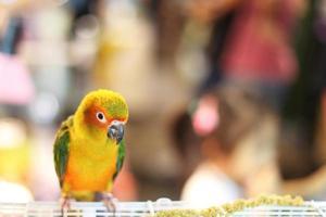 kleine papegaai foto
