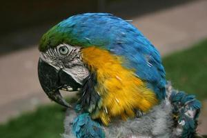 zieke papegaai foto