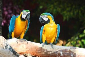 koppel papegaai foto