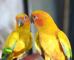 twee papegaaien foto
