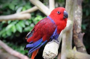 prachtige papegaai foto