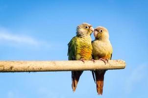 zonparkiet papegaai foto