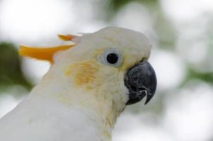 witte paraplu kaketoe