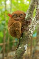 spookdier zittend op een boom, bohol eiland, filippijnen foto