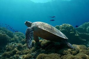 groene schildpad in rust foto