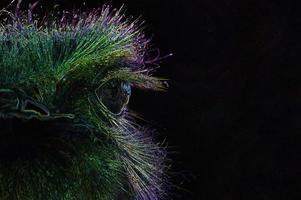gloeiende rand struisvogel hoofd foto