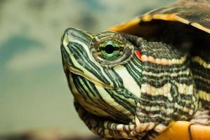 opnieuw geschilderde schildpad foto