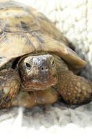 schildpad gezicht foto