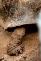schildpad lef foto