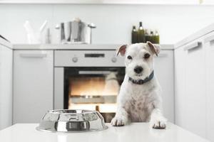 hond te wachten op een gezonde maaltijd foto