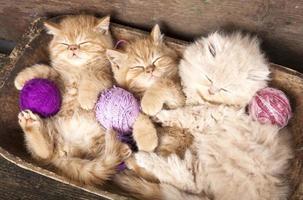 kittens slapen foto