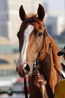 close up van paardenhoofd foto