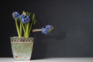 blauwe hyacinten in een oude pot op tafel foto