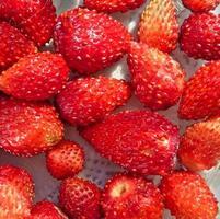 vers geplukte wilde aardbeien foto