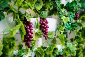 tros rode druiven op de wijnstok met groene bladeren foto